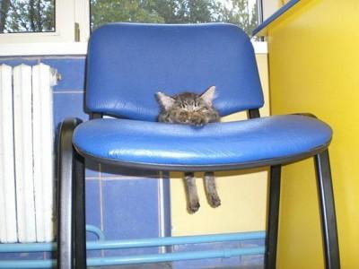 mačka v stoličke