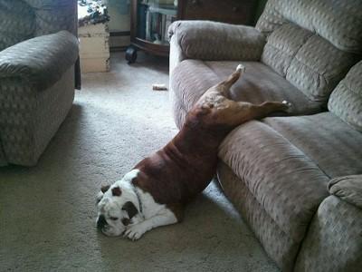 pes a spánok