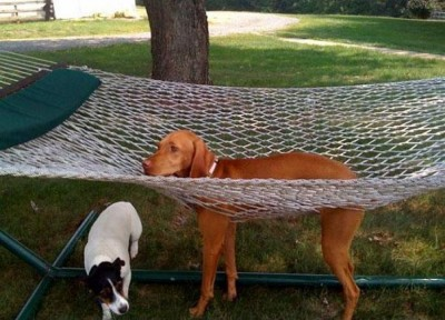 pes v sieti