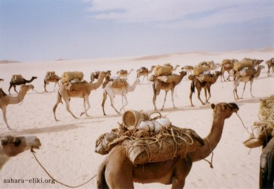 karaván na púšti